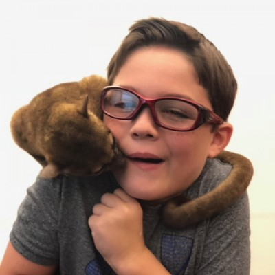 Quito the kinkajou